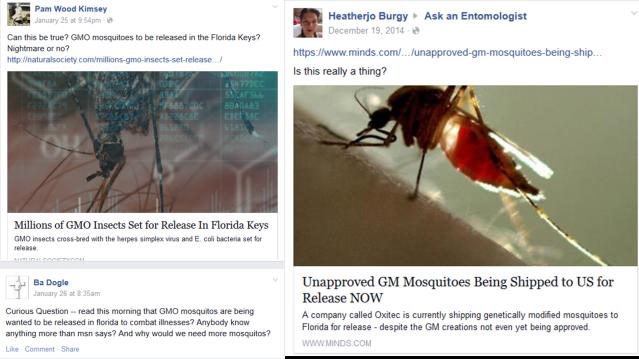 GMO mosquitoes
