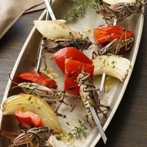 Wanna try some grub? Or Grasshopper? Check out The Bug Chef or recipes.