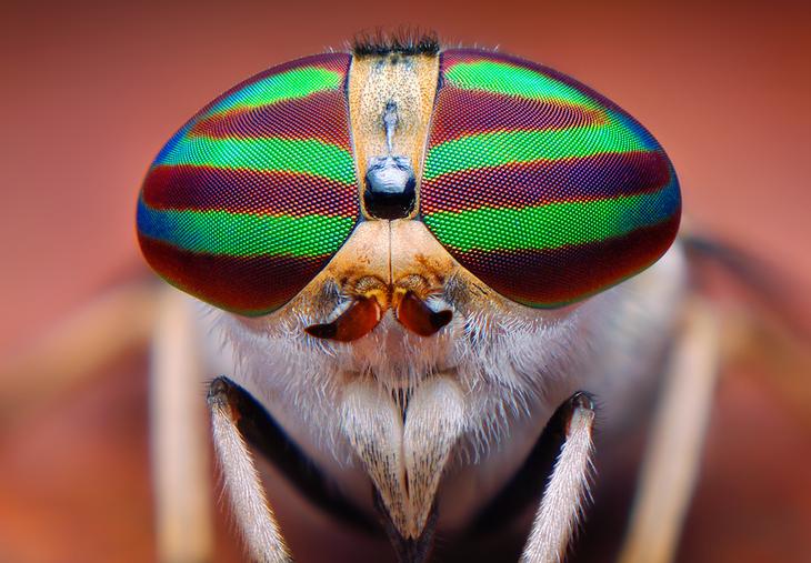 Through the Compound Eye | Ask an Entomologist