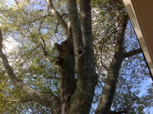 Picture of hard to reach mosquito breeding spots, courtesy of Sherry Thompson from the Garden Professor's Blog.