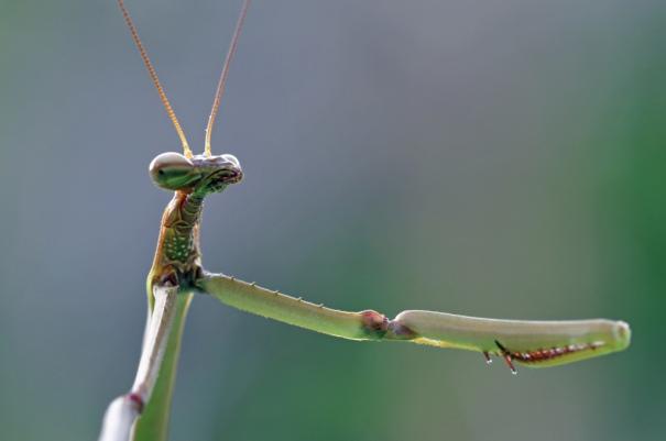 Mantises great at catching things and good at fist bumps PC: (CC by NC SA 2.0)
