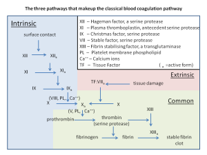 Blood clotting pathway