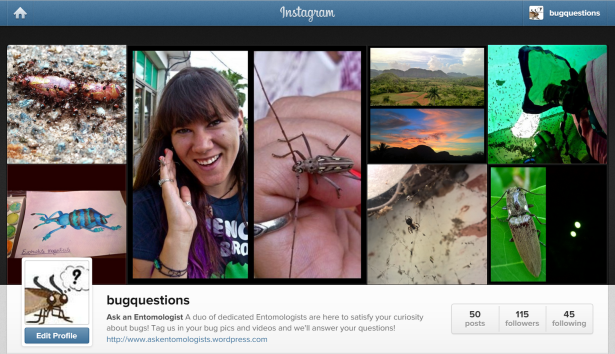 Our Instagram page! Follow us - @BugQuestions