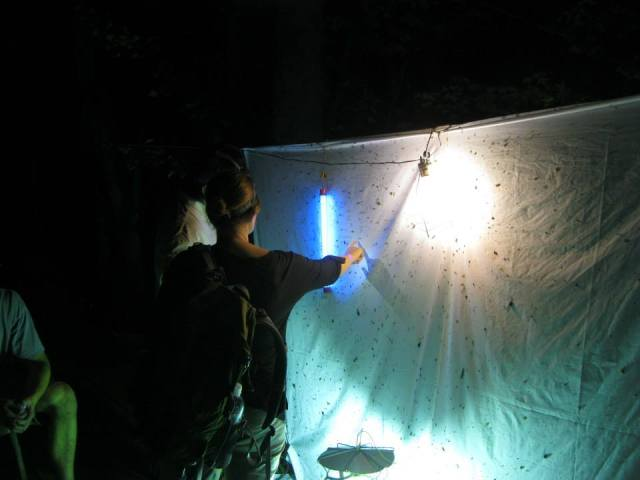 Entomologists checking out the black light at the Jean Lafitte Bioblitz in March 2013. Picture credit: Joe Ballenger