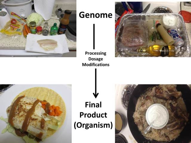 Food genomics