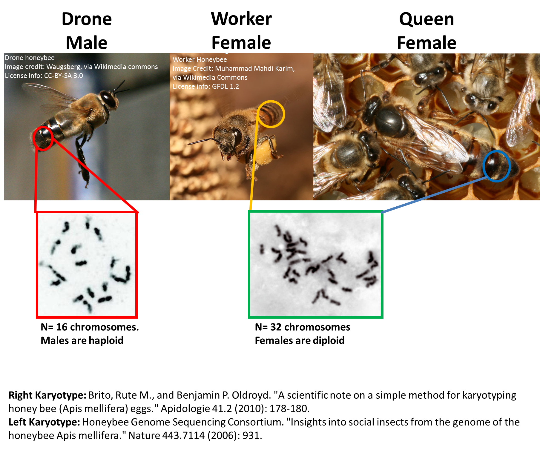 different types of drones with Honeybee Ge Ics How Do They Work on Dme Drawing Emotions Expressions furthermore Retro Plane Business Jet Passenger Plane And Military Drone 123494 Vector Clipart as well File RAN squirrel helicopter at melb GP 08 in addition Top Avec Soutient Gorge Integre in addition Number Of Grants Per Investigator.