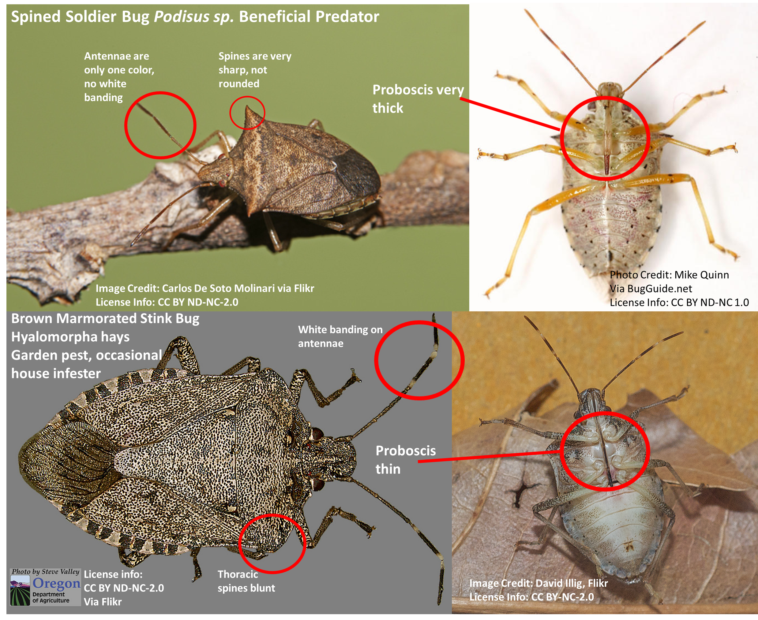 Stink bugs: Telling the good ones from the bad ones  | Ask
