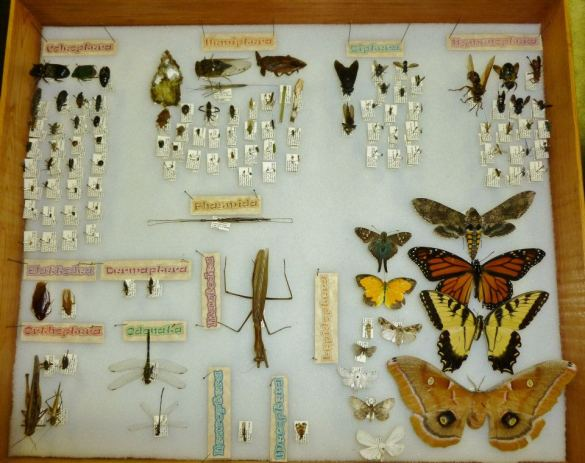 My insect collection from Grad School. PC: Nancy Miorelli