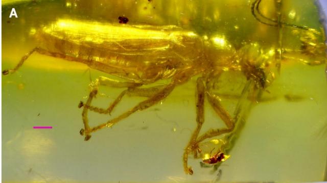 Alienoptera 2.PNG