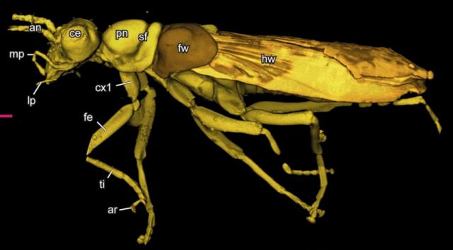 Alienoptera