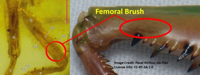 Femoral brush