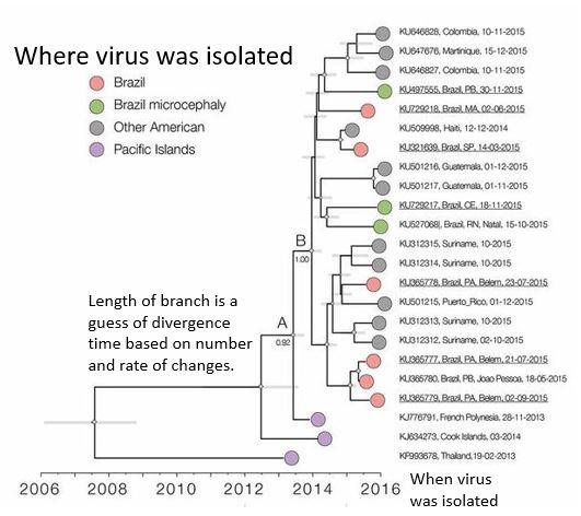Zika evolution