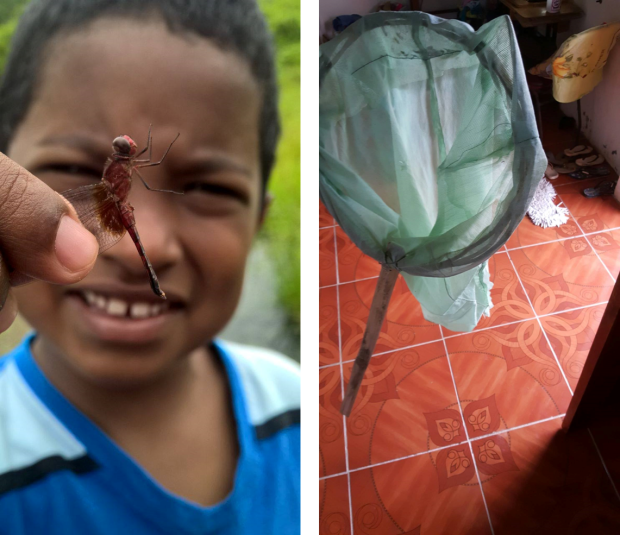 We collect bugs with a net we literally made from vines, a mosquito net, and a stick of bamboo.