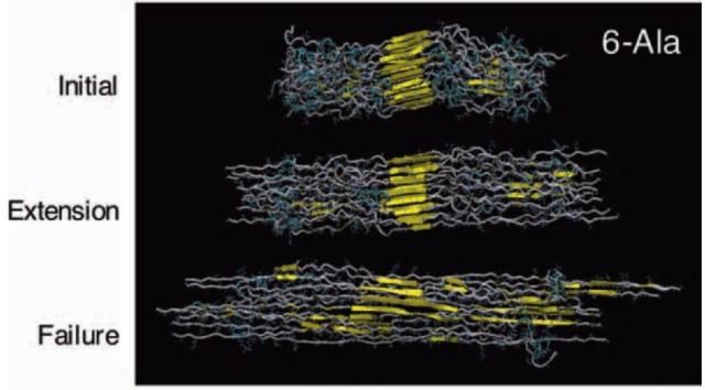 spider-silk-molecule