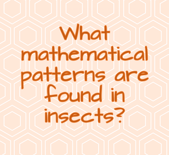 what mathematical patterns are found in insects? Ask an Entomologist