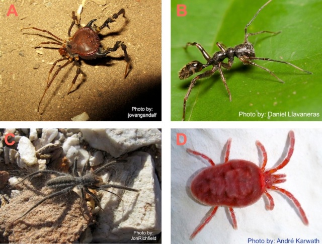 spiderquiz