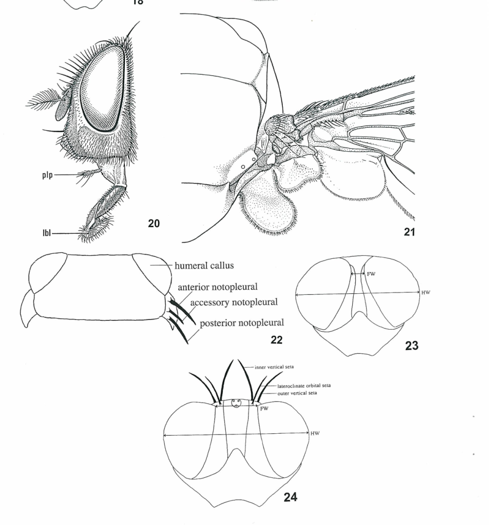 Diagram showing the complexity of insect keys. Showing a array of fly bristles and structures.