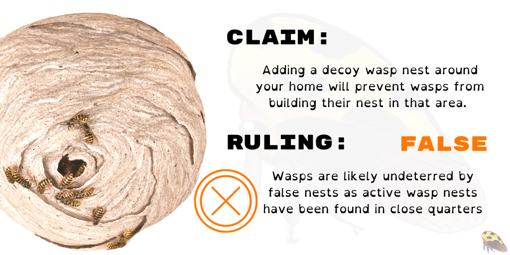 Image of a wasp nest.  Claim: Adding a decoy wasp nest around your home will prevent wasps from building their nest in that area.   Ruling: FALSE Wasps are likely undeterred by false nests as active wasp nests have been found in close quarters.